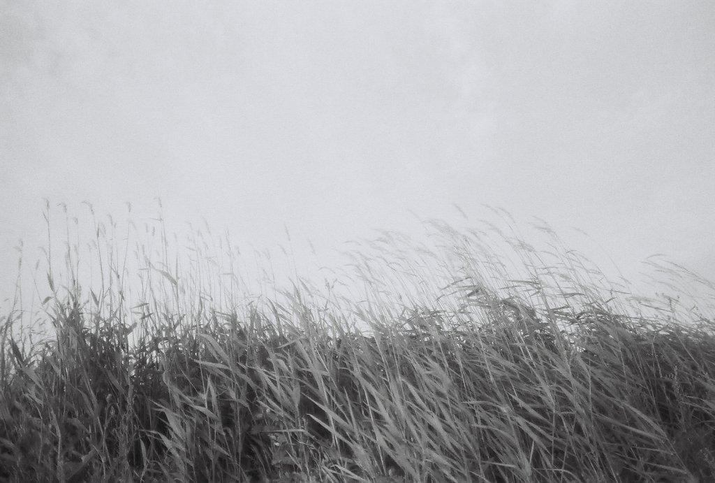 eternal grass