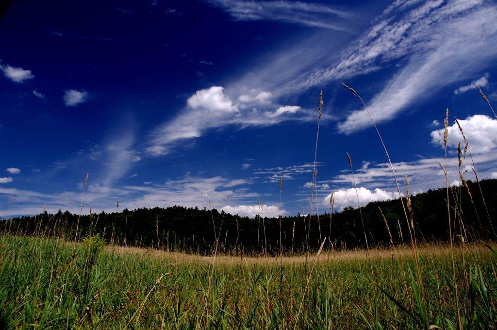 cooper hill field